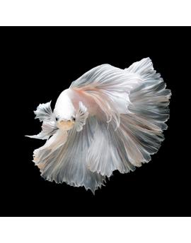 Alu Art White Beta Fish